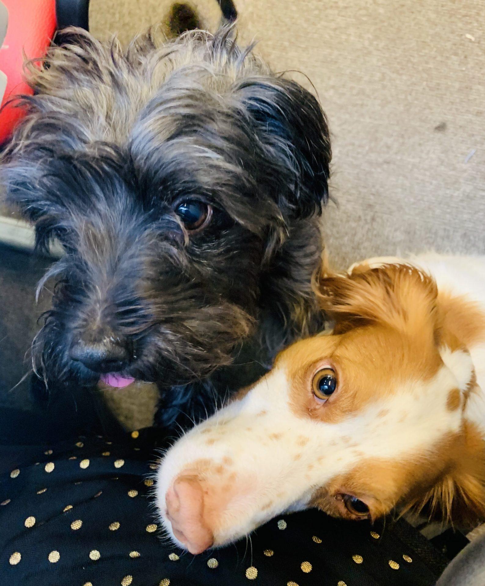 Express Recruitment office dogs